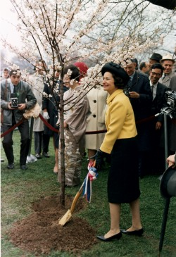 First Lady Lady Bird Johnson Planting a Tree During the Annual Cherry Blossom Festival