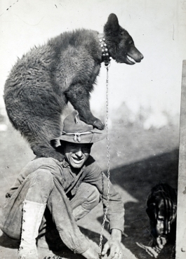 Bear on Soldier's Shoulders